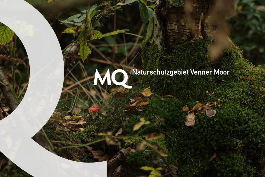 quinot.one - Naturschutzgebiet Venner Moor